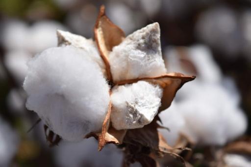 le coton, une matière anti transpiration moyenne
