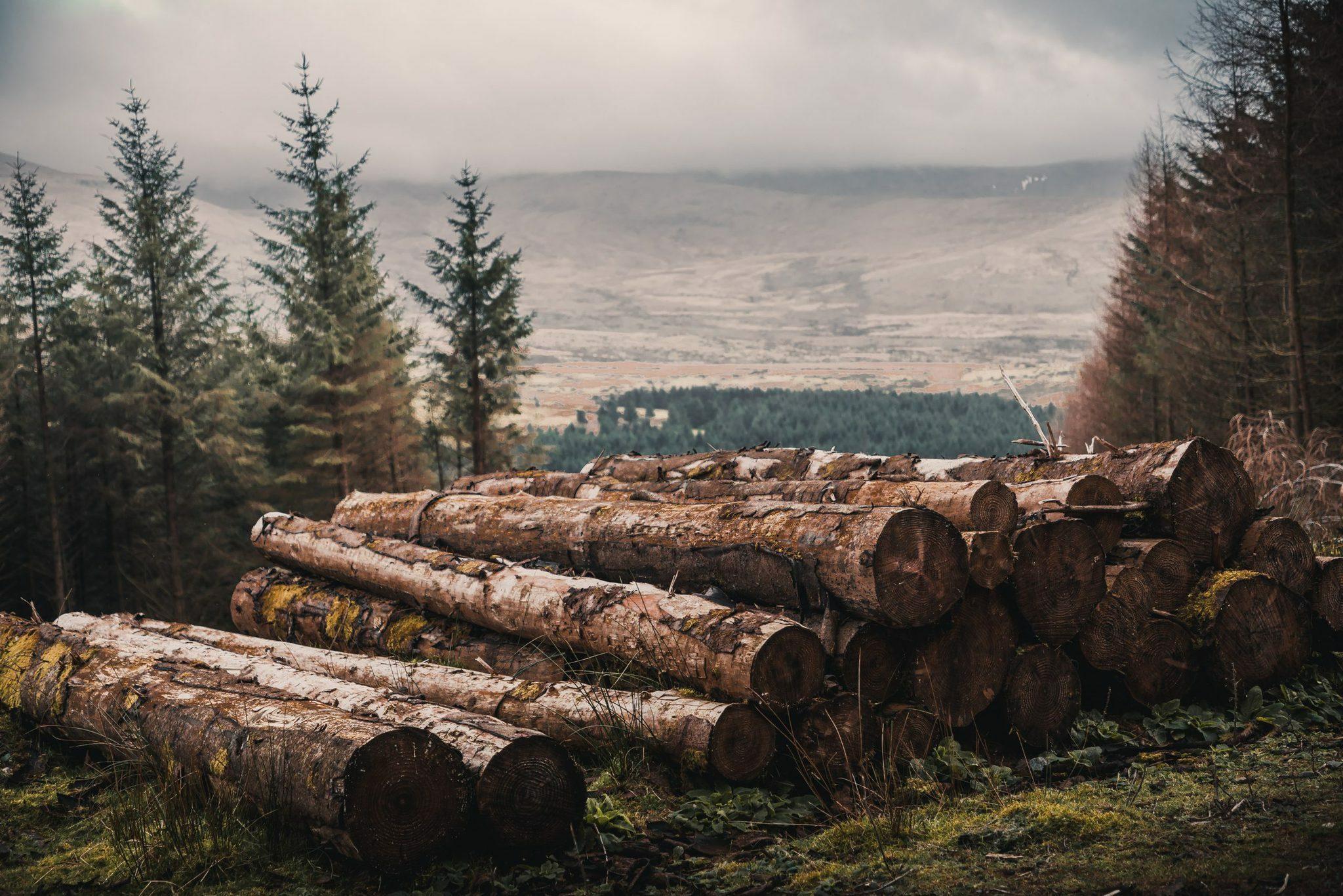 tencel troncs d'arbre de forets ecogérées